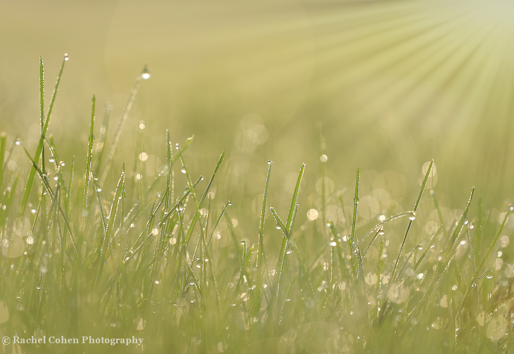 &quot;All About Light&quot;<br /> <br /> This green and golden sunlight filled nature abstract is jaw dropping gorgeous!