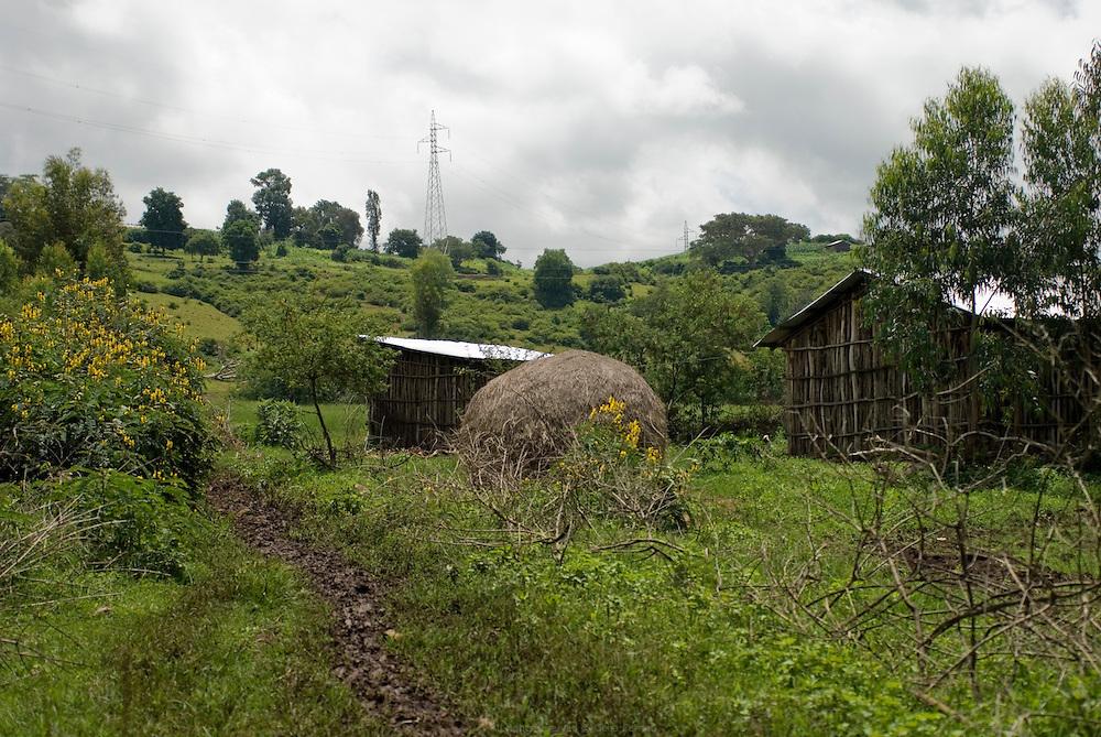 À l'est de Bahar Dar, au pied de la colline de Bezawit, agriculteurs, éleveurs et hippopotames se partagent le Nil. Une centaine de fermes sont réunies là en coopérative, profitent de l'eau du fleuve et du ruissellement naturel et, la proximité de la ville leur permet de vendre leurs produits. Éthiopie août 2011.
