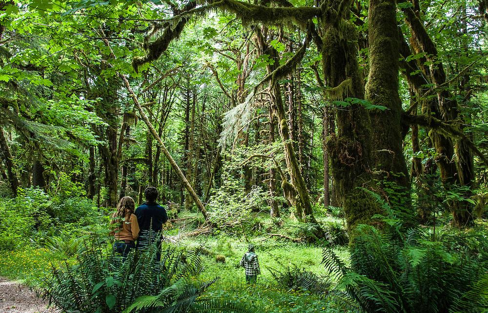 Hoh rainforest, a part of Olympic National Park, Washington.