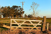 Sunlight On Fence, Pecan Island, LA (11/06)