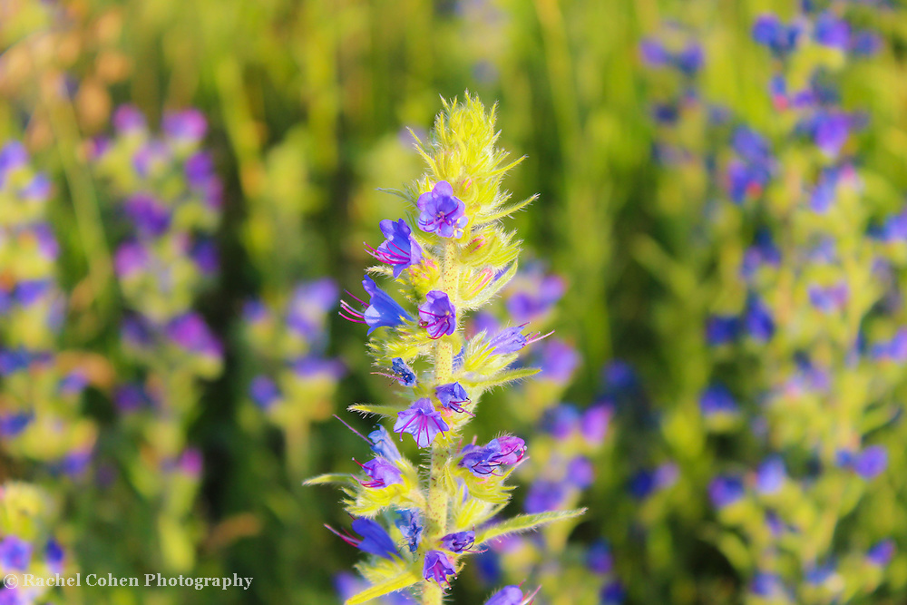 &quot;Unique&quot;<br />