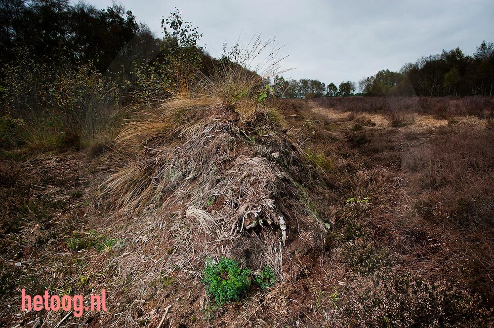 Nederland vriezenveen d.d. 13okt2010 Herman  Stevens heeft zelf het terrein gekocht toen het beschikbaar kwam. de KNNV had er al eens met een schuin oog naar gekeken omdat het zo mooi was, maar verloederde. Toen heeft Herman het zelf gekocht. Nu een prachtig stuk natte hei op veengrond, waar de oude kavelstructuur (lange rechte smalle stroken) nog zichtbaar is. Landschap Overijssel ondersteunt hem, en leent gereedschap en ehbo aan hem uit..foto:  Cees Elzenga