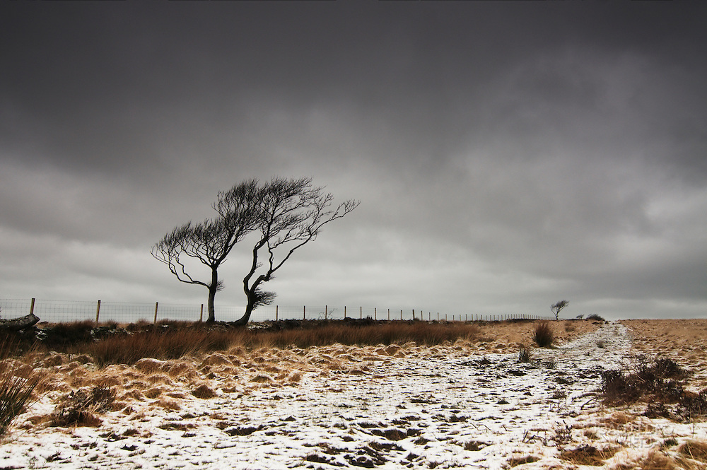 Tree at the higher part of Exmoor on a snowy morning