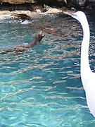Crane and Seals