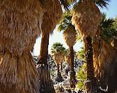 Joshua Tree and Anza Borrego Desert