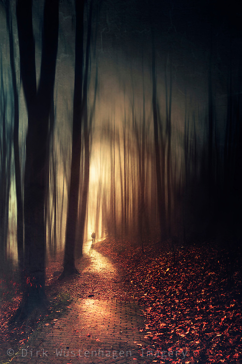 Abstract forest scene in golden backlight