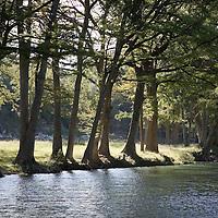 Medina River at Bandera, Texas, with cypress trees.
