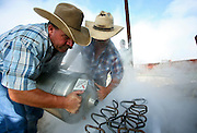 SHOT 8/20/08 10:14:20 AM - A pair of cowboys pour liquid nitrogen over a set of branding irons as they prepare to brand cattle on a ranch in Colorado. Livestock branding is any technique for marking livestock so as to identify the owner. Originally, livestock branding only referred to a hot brand for large stock, though the term is now also used to refer to other alternative techniques such as freeze branding. In the American west, branding evolved into a complex marking system still in use today. In contrast to traditional hot-iron branding, freeze branding uses a branding iron that has been chilled with a coolant such as dry ice or liquid nitrogen. Rather than burning a scar into the animal, a freeze brand damages the pigment-producing hair cells, causing the animal's hair to grow white where the brand has been applied. Freeze brands cause less damage to the animal's hide than hot iron brands, are less painful. (Photo by Marc Piscotty / © 2008)
