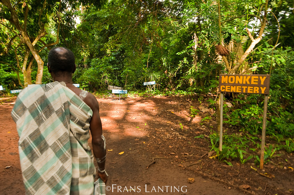 Monkey priest entering monkey cemetary, Boabeng-Fiema Monkey Sactuary, Ghana
