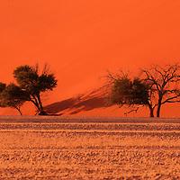 Dune 45, Sand dunes, Sossusvlei, Namib Naukluft Park, Hardap Region, Namibia