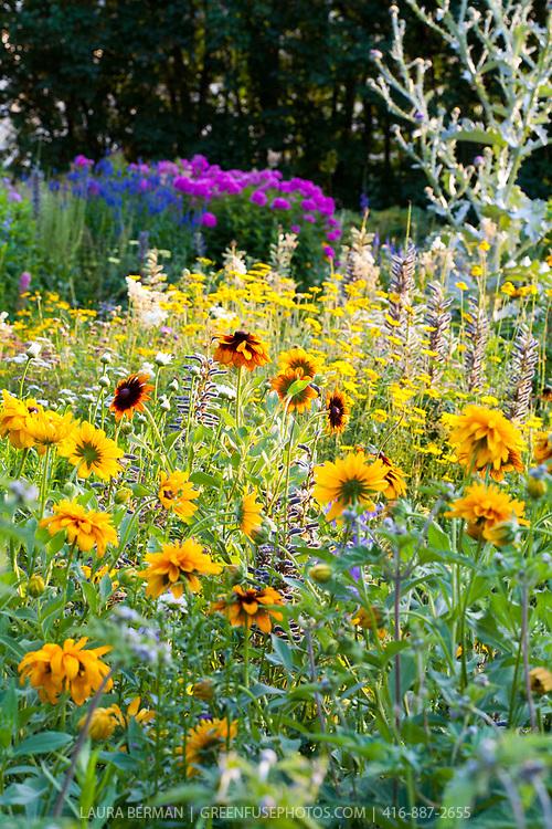 Mid-summer perennial border