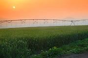 Israel, Jordan Valley, Kibbutz Ashdot Yaacov, Wheat field. Mobile watering system at sunset