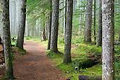National Forest Lands