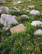 AA00682-01...MONTANA - Alpine meadow near Fossil Lake in the bsaroka-Beartooth Wilderness area.