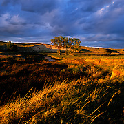 Nebraska Sandhills. The warm glow of the setting sun breaks through heavy clouds painting the Sandhills prairie and Blue Creek in October gold. Blue Creek is one of myriad groundwater fed streams that snake their way through the Sandhills. Fed by heavy groundwater flows and springs, parts of many Sandhill streams stay open year round even in the depths of winter, providing havens for wintering waterfowl, including trumpeter swans, and resident wildlife like coyotes, sharptail grouse and river otters.