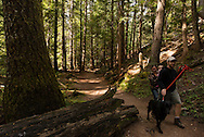 Ross Creek Cedars Scenic Area, Montana, Western Red Cedars, tourists, couple, dogs, hike