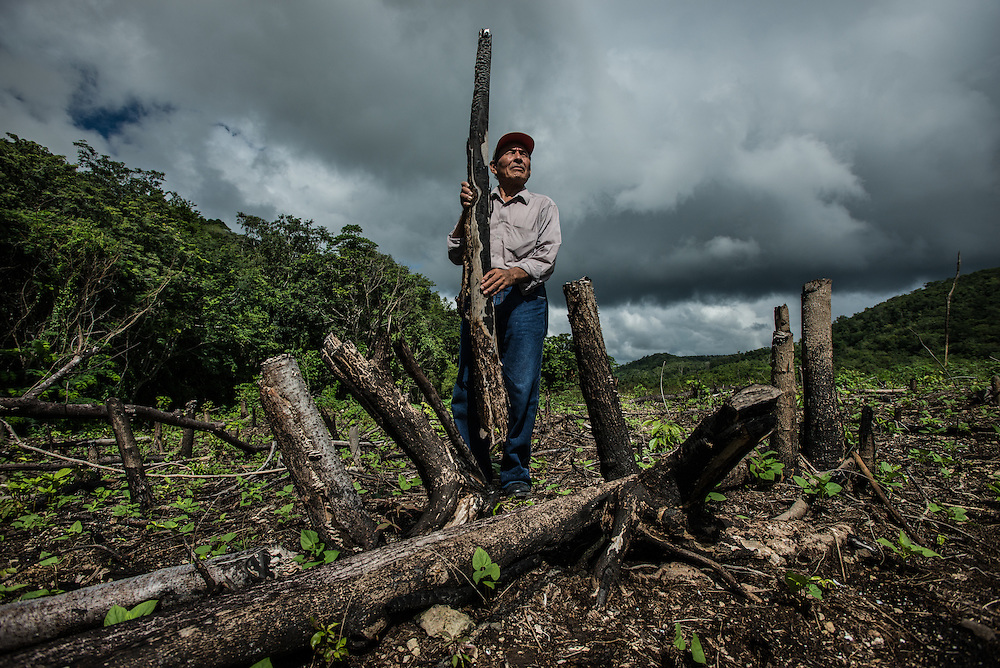 SAN ANDRÉS, EL PETÉN - GUATEMALA - NOVEMBER 5, 2015: Activist Baudelio Chi Quixchan poses for a portrait in a field inside the Maya biosphere reserve that had been illegally cleared of nearly all its trees.  He has worked as a chiclero since he was a teenager, and is an active supporter of the community forestry strategy. PHOTO: Meridith Kohut for The New York Times