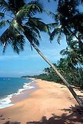 Sri Lanka..West coast beach, just north of Beruwala twon, facing north...Copyright: Dominic Sansoni