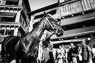 Then horse of the Onda in the piazza del Campo