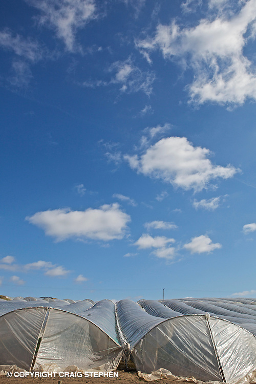 Rows of poly-tunnels against a blue sky  housing strawberries and other soft fruits