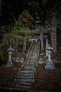 """Lanterns and a torii gate guard the stairs climbing up through sugi (Japanese cedar) and pine trees to a village Shinto shrine in Iitate-mura, Fukushima Prefecture, Japan.  So-called, """"avenues of sugi"""" are emblematic of Japanese Shinto Shrines and Buddhist temples."""