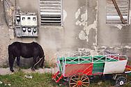 Miniature horse and cart in Santa Fe, Havana, Cuba.