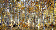 Boulder Mountains, Idaho<br /> Also available as a triptych, up to 60 x 120.