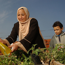 Cairo, Egpyt: Fayoume, Egypt: Oum Hashem Rashad, 46, works in her rooftop garden in Fayoume, Egypt December 5, 2005. She is a recipient of the telefood project by FAO which has enabled her to have a small garden on her roof. The extra food has  provided an extra income for her family and also fresh, pesticide free vegetables. (Photo Ami Vitale)