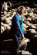 10: GENERAL SORTING SHEEP