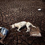 A dead dog in Namie, Fukushima. April 2011.