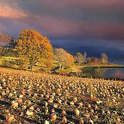 Autumn light over Loch Etive and Ben Cruachan, Argyll