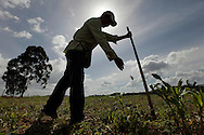 2010/07/04 15:47:36 peter_in/ honduras /_MG_4706<br /> PHOTO PETER PEREIRA<br /> <br /> Francisco Montoya, 25, plants corn in a field in Esmeralda, Honduras.  The  largest crops are corn beans and coffee. Honduras is considered the third poorest country in the Western Hemisphere (Haiti, Nicaragua). With over 50% of the population living below the poverty line and 28% unemployed, Hondurans frequently turn to illegal immigration as a solution to their desperate situation. The Department of Homeland Security has noted an 95% increase in illegal immigrants coming from Honduras between 2000 and 2009, the largest increase of any country.