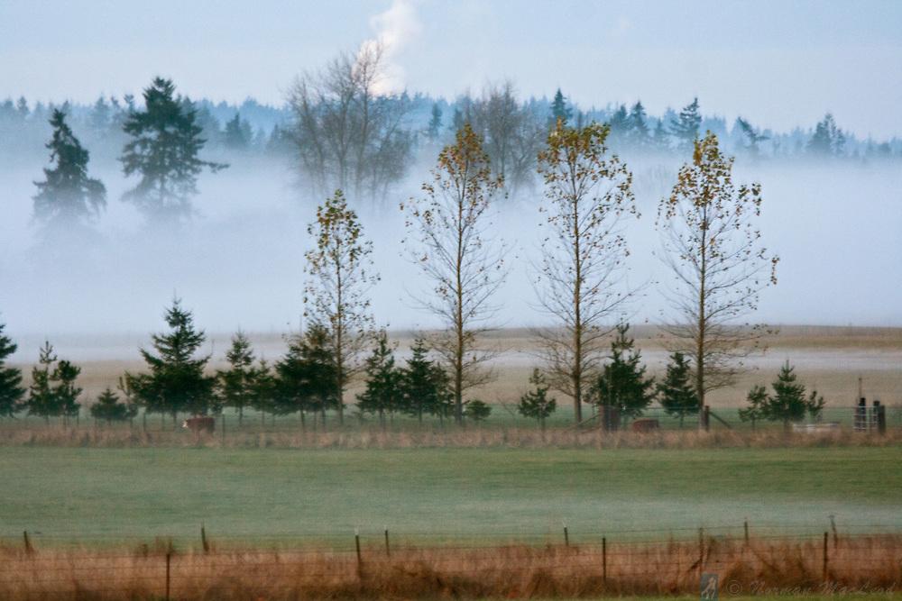 Morning fog in Beaver Valley, near Chimacum, Washington