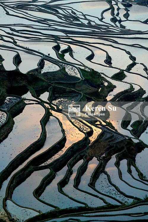 Landscape of water filled rice terraces at sunrise in the mountain, Yuanyang, Yunnan Province, China