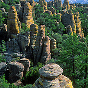 "Chiricahua National Monument, Arizona: The Heart of the Rocks Loop Trail (7 to 9 miles) makes a perfect day hike through the hoodoos here. 27 million years ago, huge volcanic eruptions laid down 2000 feet of ash and pumice in this area, which fused into a rock known as rhyolitic tuff.  Since then this rock has eroded into fascinating hoodoos, spires, and balanced rocks which lie above the surrounding desert grasslands at elevations between 5100 and 7800 feet. At Chiricahua, the Sonoran desert meets the Chihuahuan desert, and the Rocky Mountains meet Mexico's Sierra Madre, making one of the most biologically diverse areas in the northern hemisphere. While we drove the dirt road to nearby Portal, Arizona, Carol saw a mountain lion crossing the road! Other animals here include javelina, coatimundi, bears, skunks, and deer. Published in ""Light Travel: Photography on the Go"" book by Tom Dempsey 2009, 2010."