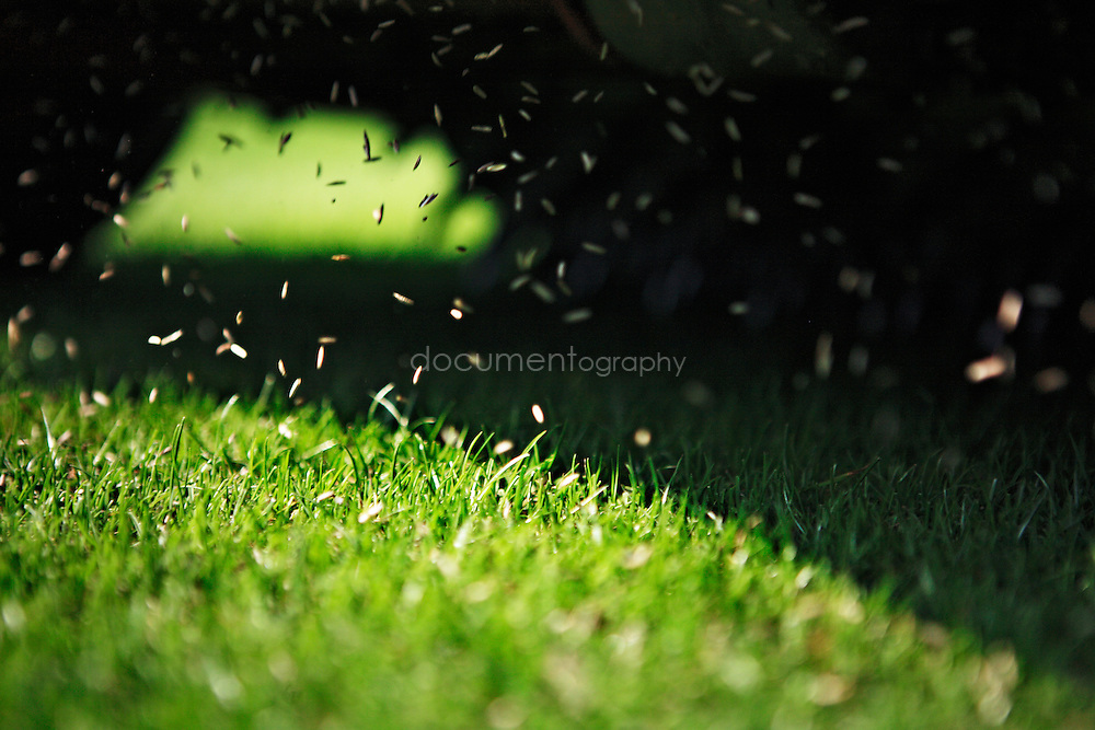 A machine scattering seeds on the grass of Wimbledon