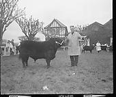 1971 - R.D.S. Bull Show.