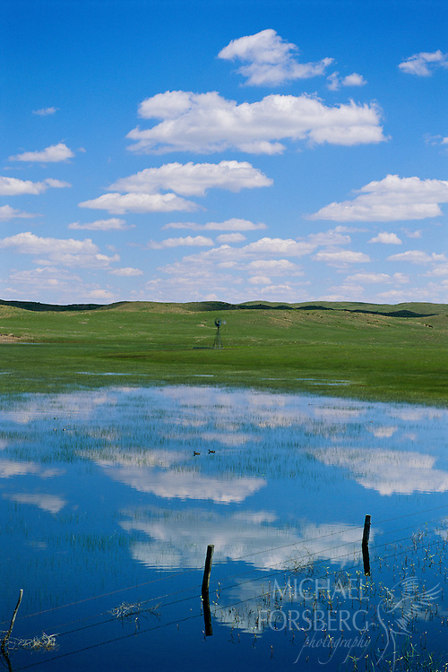 Ranch landscape with blue-winged teal, fence and windmill. Nebraska Sandhills.