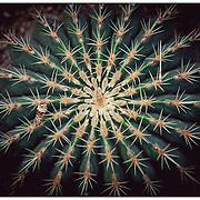 kew cacti