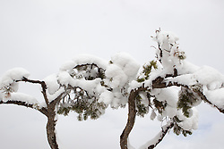 snow covered trees in Santa Fe, NM