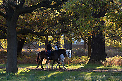 Horse riders in the cold morning frost at Richmond Park as weather in the UK turns to freezing. London, United Kingdom. Tuesday, 19th November 2013. Picture by Ben Stevens / i-Images