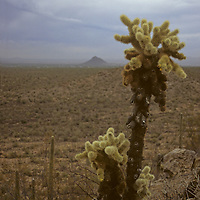 USA, Arizona, Tucson. Saguaro National Park (East).