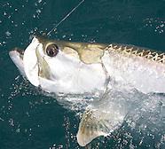 Costa Rica Tarpon Fishing
