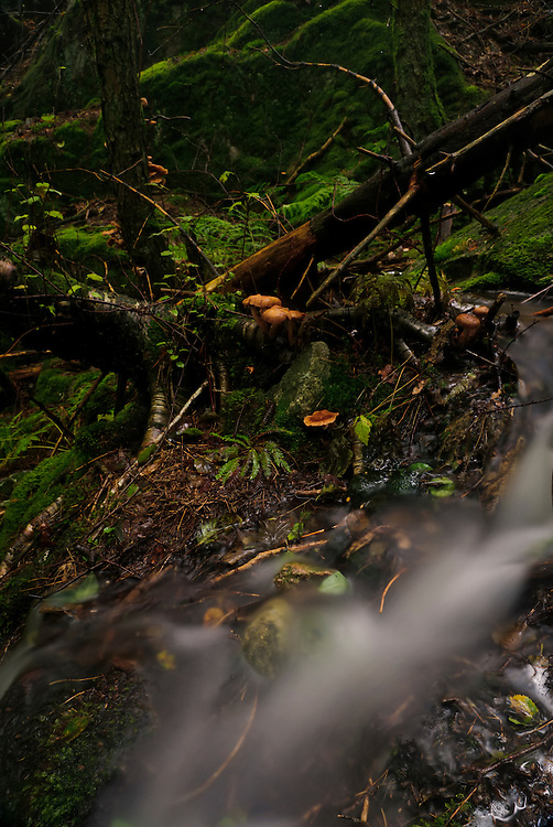 A small forest creek