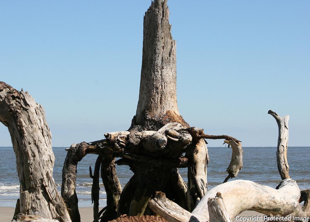 Strange petrified tree on Driftwood Beach Jekyll Island.