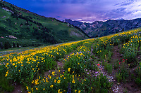 Summer in the Wasatch Mountains of Utah bring beautiful sunsets and loads of wildflowers.