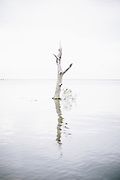 A dead tree inundated with salt water, is covered by high tide in the Kent Narrows on the Eastern Shore of Maryland.
