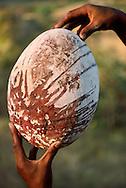 Man holding extinct elephant bird egg smeared with blood from sacrifice, Aepyornis maximus, Madagascar