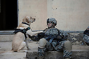 U.S. Army Staff Sgt. Kevin Reese and his working dog, Grek, wait at a safe house before conducting an assault against anti-Iraqi forces in Buhriz, Iraq, on Apr. 10, 2007. After over 1,000 residents of this Baqubah suburb were displaced by Al-Qaeda insurgents, U.S. Army Soldiers from the 5th Battalion, 20th Infantry Regiment, 2nd Infantry Division, and Iraqi army soldiers from the 4th Battalion, 2nd Brigade, 5th Division, go house-to-house in search for weapons caches and enemy fighters.
