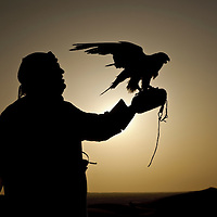 Al-Ain (Abu Dhabi), United Arab Emirates 04 April 2009<br /> A man holds a hunting falcon in desert of Al Ain.<br /> The falcon is used for hunting in Arabia, and is an important part of the Arab heritage and culture. <br /> The UAE reportedly spends over 27 million dollars annually towards the protection and conservation of wild falcons, and has set up several state-of-the-art falcon hospitals in Dubai and Abu Dhabi. <br /> There are two breeding farms in the Emirates, as well as those in Qatar and Saudi Arabia. Every year, falcon beauty contests and demonstrations take place in Abu Dhabi.<br /> Photo: Ezequiel Scagnetti